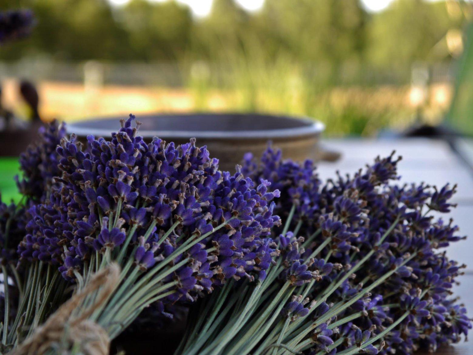 Plantas madrid archivos viveros don pedro - Viveros plantas madrid ...