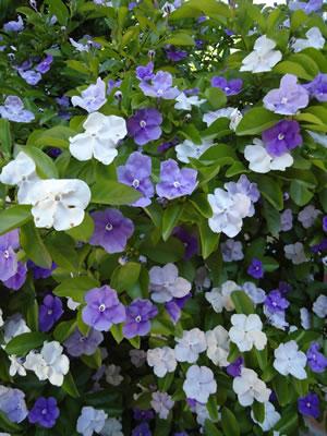 jardineria-primavera-2