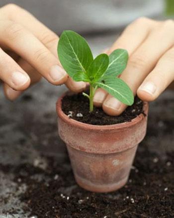 Necesita mi planta ser trasplantada viveros don pedro for Vivero mi planta