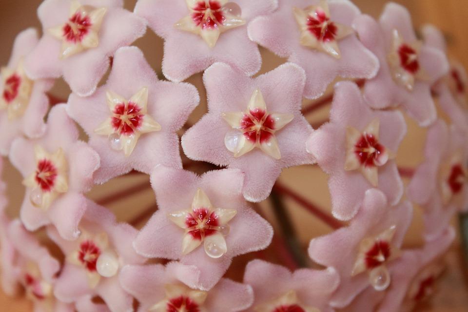 flower-839699_960_720