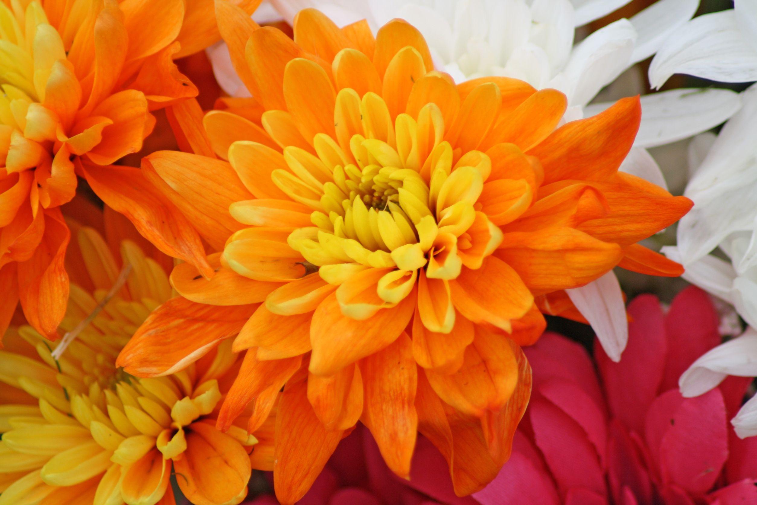 flores de otoño