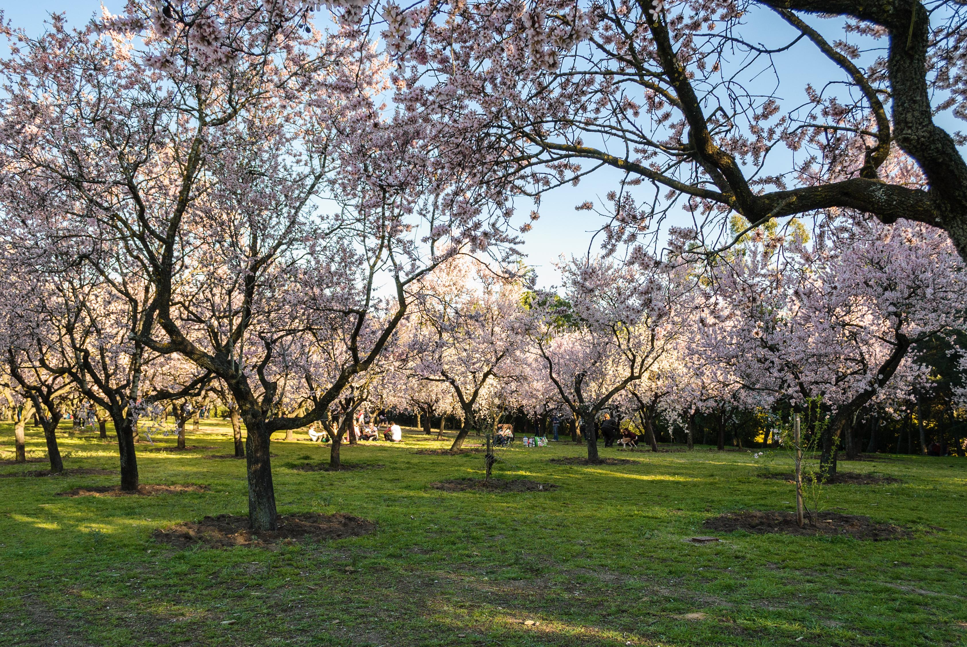 Sitios para disfrutar de las flores en madrid viveros for Viveros de arboles en madrid