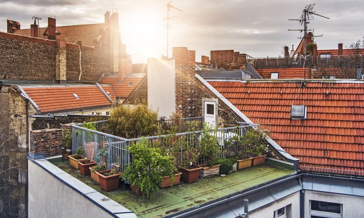 57802672 - small rooftop garden with lots of potted plants on a sunny evening
