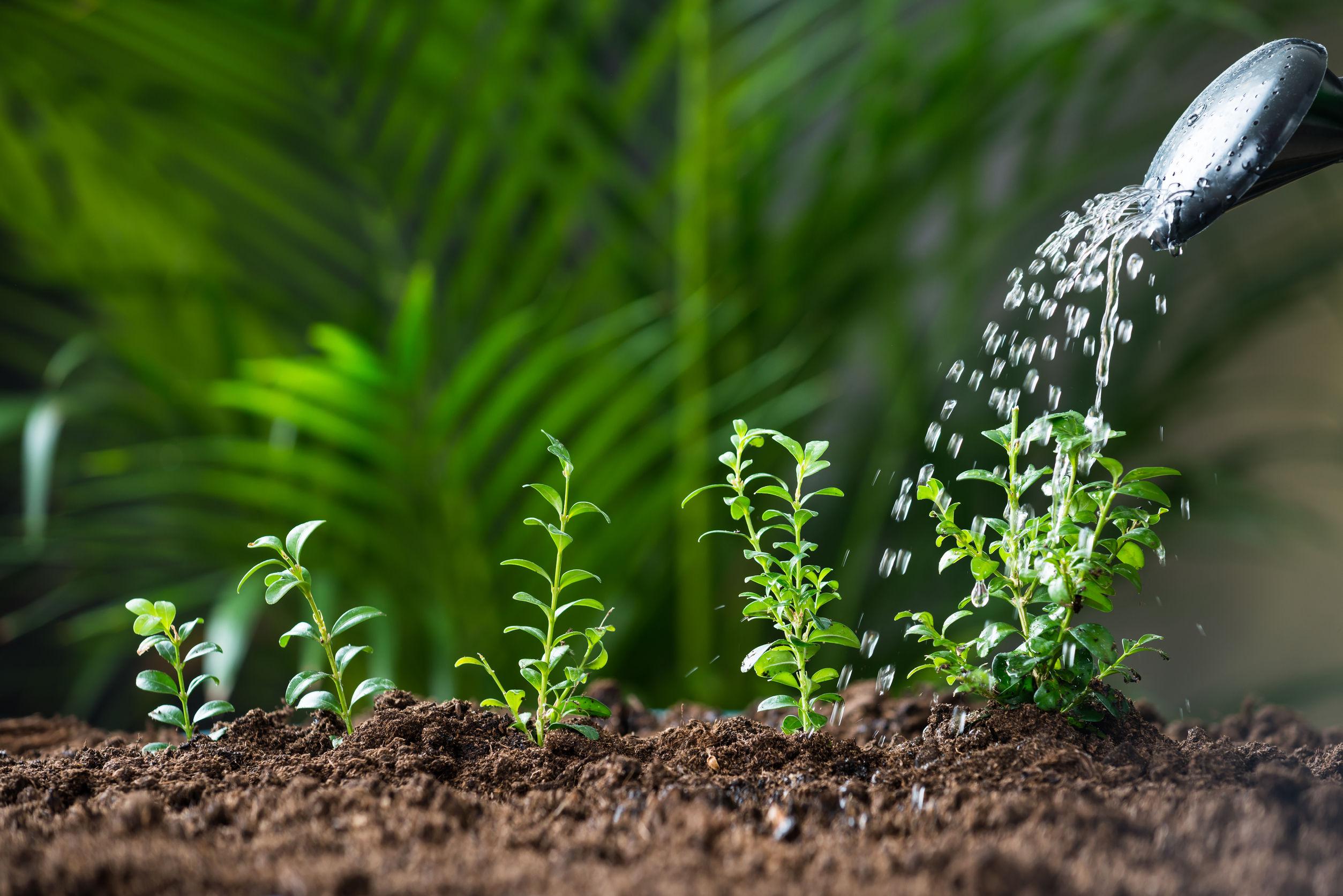 Consejos para regar en verano tu jard n viveros don pedro for Vivero tu jardin