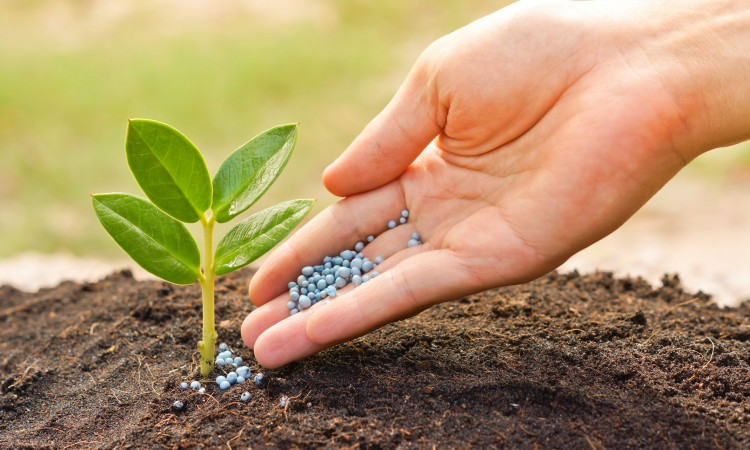 28912156 - a hand giving fertilizer to a young plant with warm sunlight   planting tree